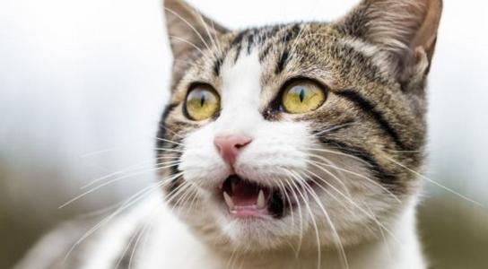 Meski Menggemaskan dan Sering Bertingkah Konyol, di Australia Kucing Jadi Ancaman Bagi Satwa Liar. Kok Bisa?